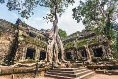 Cambodia-Angkor-Ta Prohm Temple_105818777_1