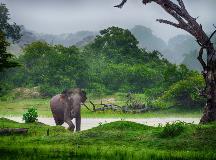 Sri-Lanka_126694037