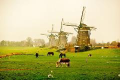 Netherlands_111581378